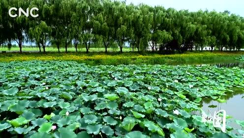 瞰中国|运河湿地 天空之境
