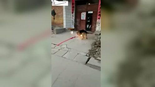 狗子:不瞒您说我就好这口