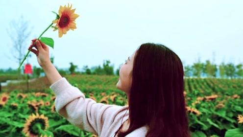白马湖向日葵游玩