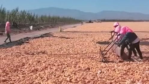 劳动人民太智慧了,堆玉米还能这样干,前面用车拉后面还有推的