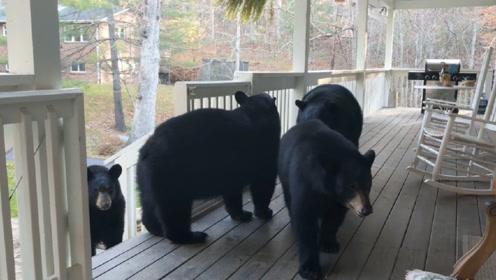 男子在后院晒太阳,4只黑熊窜了进来,接下来一幕让人难以置信!