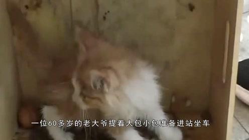 一大爷带一只猫乘坐公交被拒,一气之下竟扔站台上不要了!