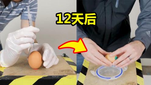把人类DNA注射进未孵化的鸡蛋内,12天后会孵化出什么?