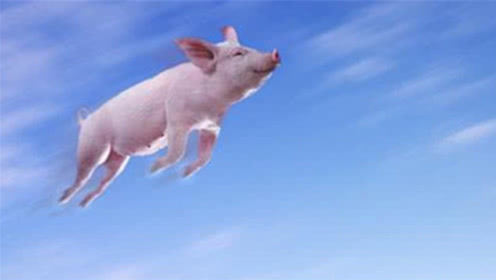 猪飞不动了!河南千亿富豪身家缩水190亿,曾靠22头猪起家