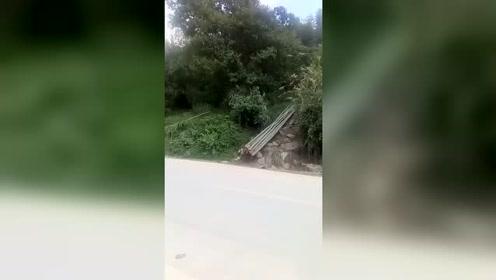 这匹马真给力,自己拉了那么多根竹子,可不比一辆车差