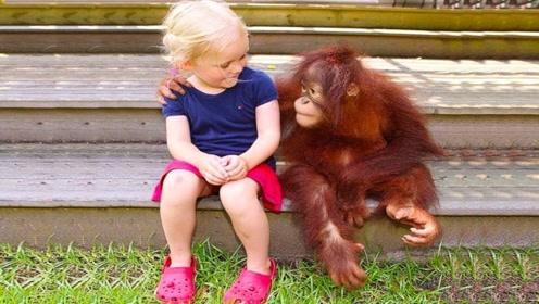 猩猩和婴儿一起长大,竟认为自己是人类,专家全过程连忙终止实验