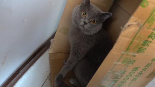 猫咪的秘密基地被发现了,它会不高兴吗