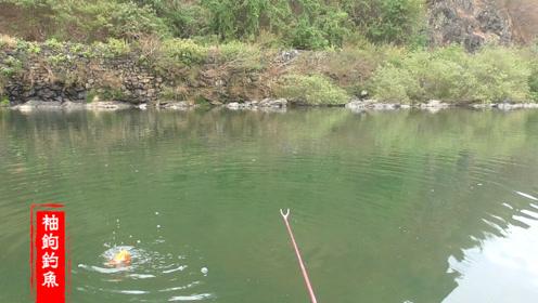 野钓这样的环境真的不多了,下杆必有鱼钓鱼人的天堂