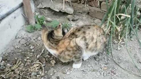 现实版猫和老鼠!猫:放了你你感动吗?老鼠:不敢动