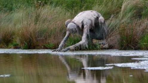 """女子在河边散步,看到一只""""怪物""""在喝水,吓得掉头就跑!"""