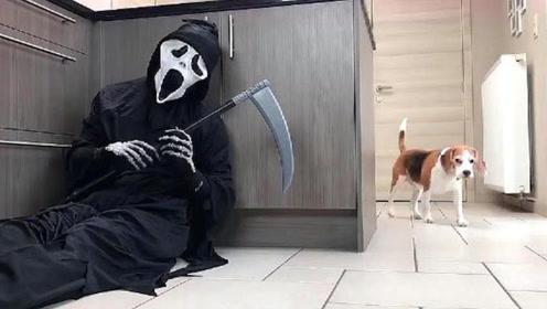 """""""死神""""躲在厨房,想要将狗狗带走,镜头记录下全过程"""