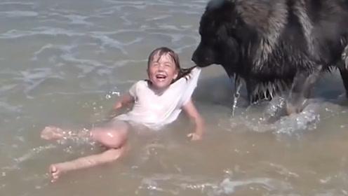 宝宝在二哈面前假装落水,接下来二哈的反应让主人都懵了!