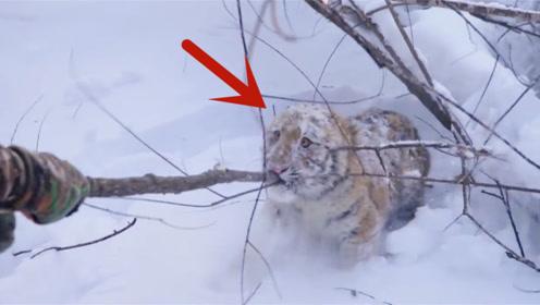 男子在雪地中听到猫叫声,看清楚后不得了,镜头记录全过程
