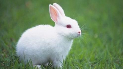 属兔的注意了!仔细斟酌10月运势,平安度过财运大涨