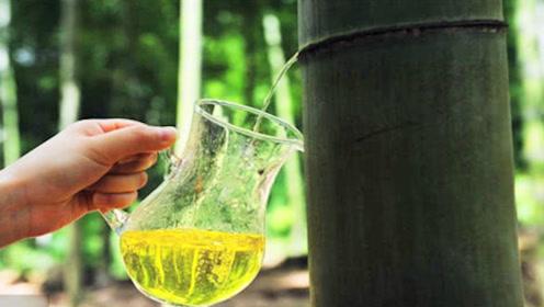 """网红的""""竹筒酒""""是怎样酿制的?看完制过程,你还敢喝吗?"""