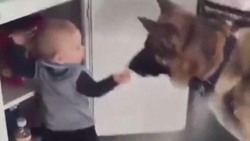 """最萌的""""偷盗""""组合,小主人跟狗狗偷零食,妈妈在一旁看的清清楚楚"""