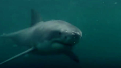 小哥悬崖跳水偶遇鲨鱼 头戴摄像机拍下惊险全程