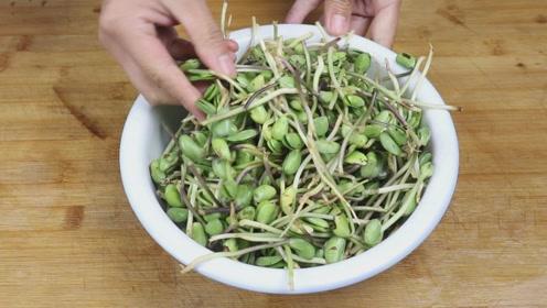 野生绿豆芽的新吃法,简单一做,开胃下饭,招待客人倍儿有面!