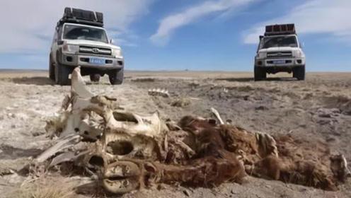 为何国家禁止进入西藏无人区?不仅有凶狠的动物,还有更可怕的它