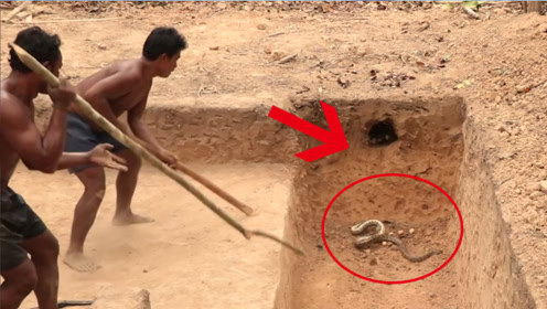 穷小伙野外建造房子,竟挖出蟒蛇窝,镜头拍下惊险一幕!