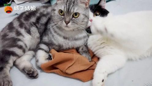 原本只会打架的兄弟猫,今天却秀起了恩爱!羞羞羞!两只都是公的