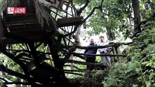父亲深山搭鸟屋圆儿梦想 树屋高十米还有俩窗 能听到鸟叫声