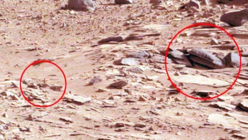 NASA隐瞒火星上有生命?这个美国科学家道出40年前的大发现