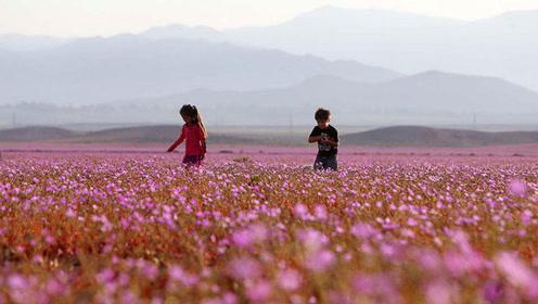 世界上最干旱的沙漠,91年未下过一滴雨,却一夜之间开满了鲜花