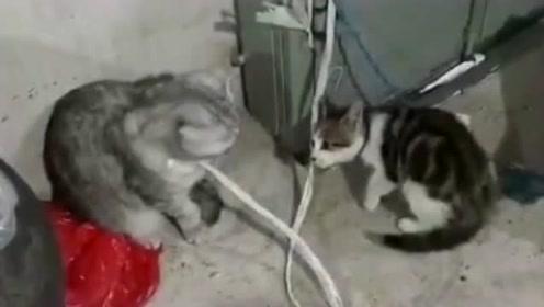 农村偶遇搞笑事,迅雷不及掩耳揍猫之势,求黑猫的心理阴影面积!