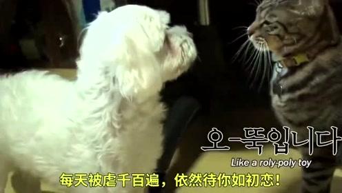 狗狗疯狂暗恋猫咪,猫咪躲在纸箱中狗狗直接咬碎