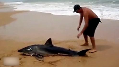 一条搁浅的鲨鱼拼命挣扎自救,路人却自顾照相,还好这位小哥路过