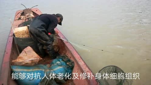 吃野生雄鱼原来有这么多好处,这个桂阳人知道吗桂阳
