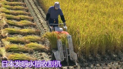日本大学生发明水稻收割机,收割捆扎一次完成,一天就能收15亩!