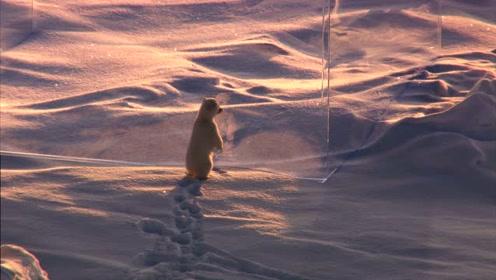 是什么点燃了北极熊的好奇心?