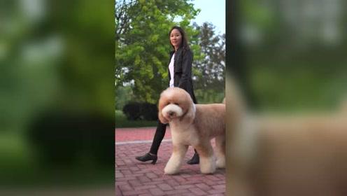 遛狗这样玩,真是美!