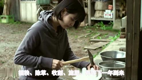 《小森林》夏秋篇:不卖情怀,卖的是什么?