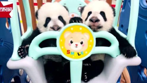 国宝的名字你来定!秦岭大熊猫繁育研究中心面向全国为熊猫宝宝征名