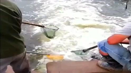 大家堵在出水口抓鱼,能不能中鱼全靠鱼自己选择了!