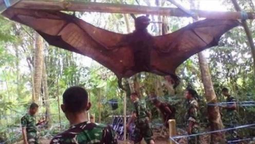 世界上最大的蝙蝠