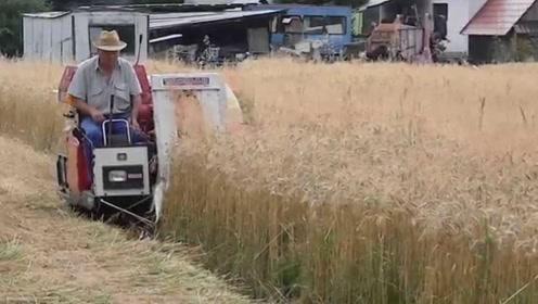 美国发明小型小麦收割机,收割脱粒装袋一次成型,一天能收20亩地