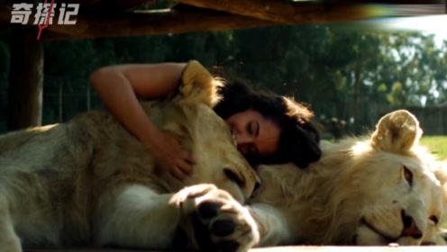 美女与野兽:美女和狮子的浪漫故事,真是太温顺了!