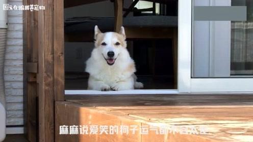 柯基:妈妈说爱笑的狗子运气都不会太差