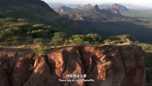 中国人帮非洲开垦荒地,种出粮食时当地人佩服的不行。