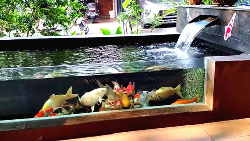 简约而不简单的锦鲤池,站在一旁瞧一瞧,你可能会爱上它!