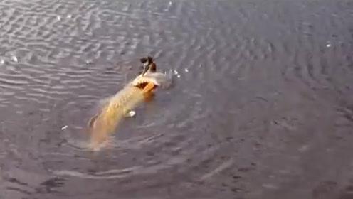 水里传来奇怪叫声,男子用镜头拉近一看,既惊奇又佩服