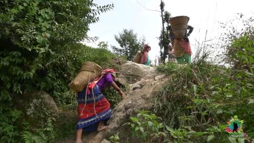 在尼泊尔,妇女在山上背一天沙子,能赚多少钱?中国小哥感到心酸