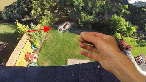 蚂蚁从高楼坠落是否能摔死?老外作死亲测,高速摄像机还原全程!