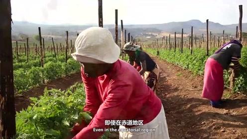 非洲人的真实生活环境,和你听的不一样