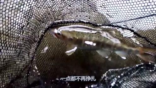 钓鱼:在清水溪流里玩路亚,刚抛竿就上钩