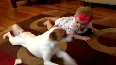 狗狗趴在地上教小主人爬行,言传身教的样子,笑翻所有人